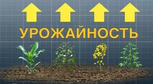 надпись ГМО