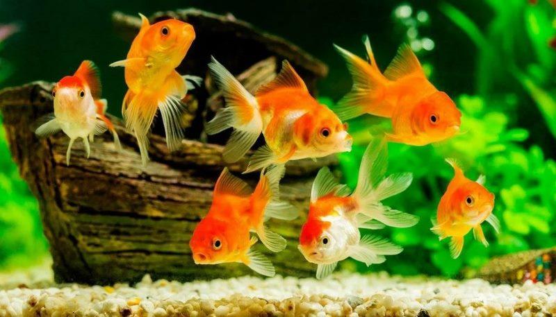 выбор рыбок в аквариум