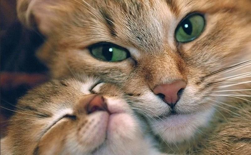 откуда появились кошки