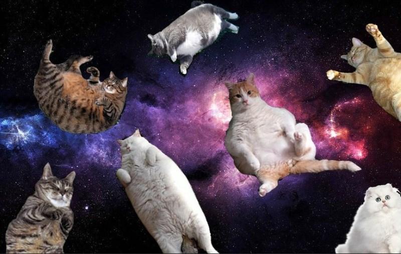 кошки прилетели из космоса